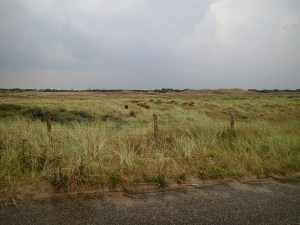 Dunes around Den Helder