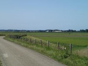 Road to Schoorl, looking towards sand dunes